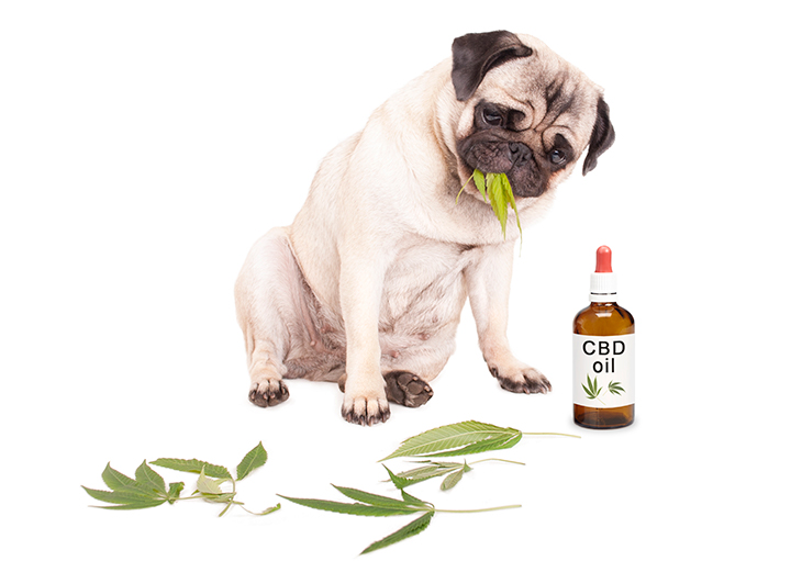 organic cbd for dogs