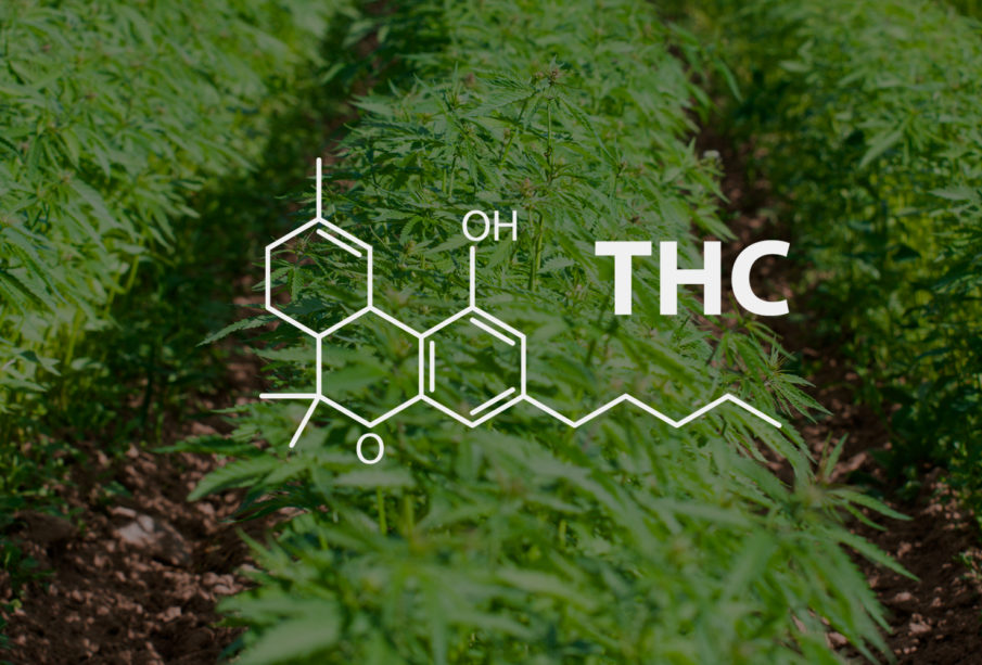 Why THC? 12 Amazing Benefits of THC